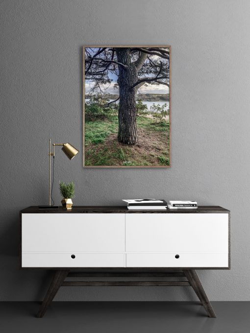 Oak view photo art